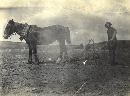 Cultivating a crop of maize on the Omaha Flats - ? collection