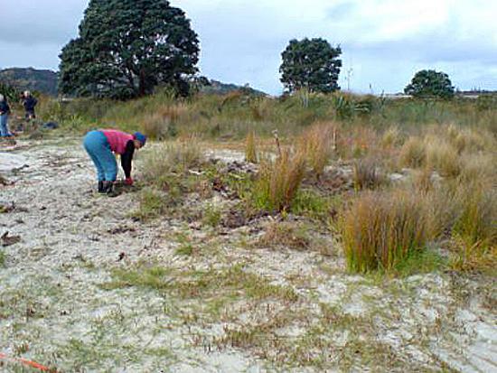 Horseshoe Island Weed Blitz - Roger Grace