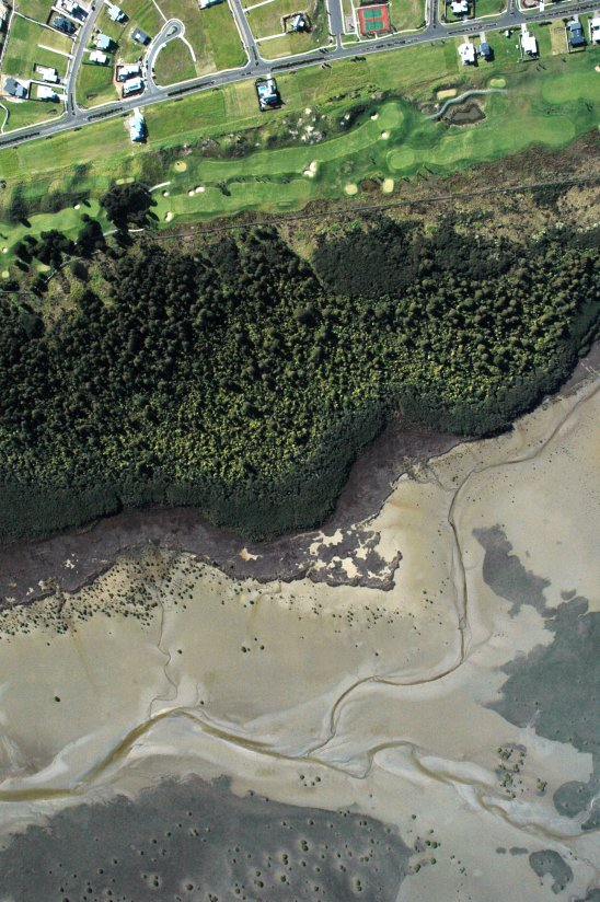 Upper Whangateau Harbour ecotone with the golf at the top, the kahikatea forest centre and the harbour at low tide at the bottom
