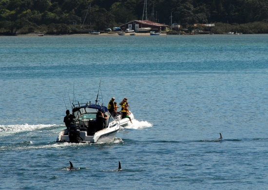 The dolphins finally leaving the harbour, with the Tramcar Bay boatshed in the background.