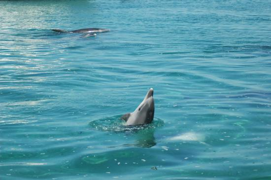 Dolphins in Whangateau Harbour - Photo: Lily Kozmian-Ledward
