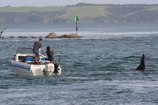 Figure 1.  This boat was clearly getting too close to the orca in the Ti Point channel.  Note the four fishing rods standing in rod holders.