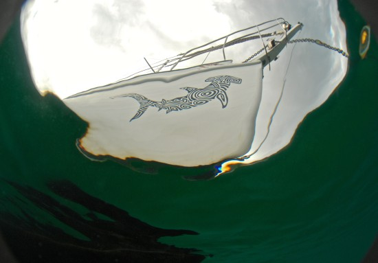 Lily's yacht Amadis has a distinctive hammerhead shark drawing on the bow.
