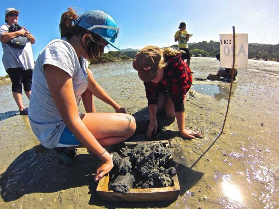 Students digging sand and shellfish from the marked quadrat site and placing it in the sieve