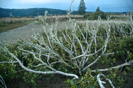 Mangroves (10)