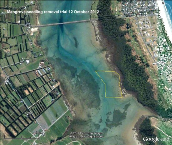 Proposed mangrove seedling removal trial area, approximately 10 hectares.