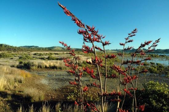 Mangroves (9)