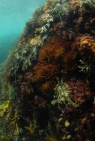 Flagging kelp_Feb-15pdf 21