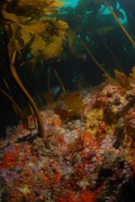 Flagging kelp_Feb-15pdf 23