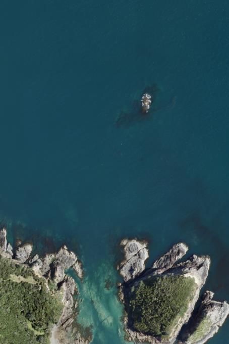 Flagging kelp_Feb-15pdf 26