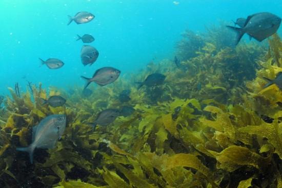 Rich kelp forest